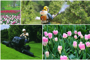 http://www.coopzoe.it/images/Gallery/Collage_giardinaggio_zip.jpg
